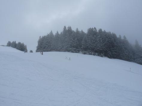 Soll Austria Ski Snow Trees