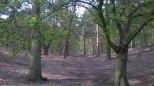 Sandy RSPB Woodland Pathway