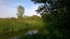 Arlesey Spring Green Fields Stream